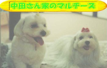 top_b_.jpg